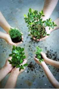 Plants Hands
