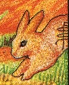Bunny Q P