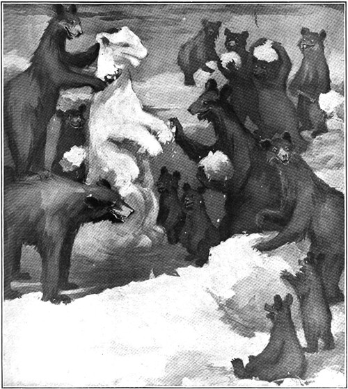 Snow Bears Colliers-Dec-7-1901 500