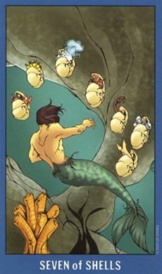 7 of Shells