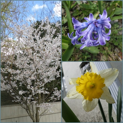Spring Montage